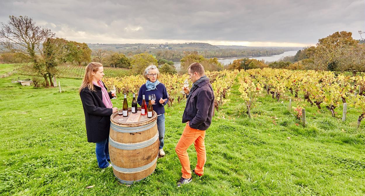 « Wine-tasting introduction to the Domaine des Génaudières wines - Le Cellier » © A. Lamoureux