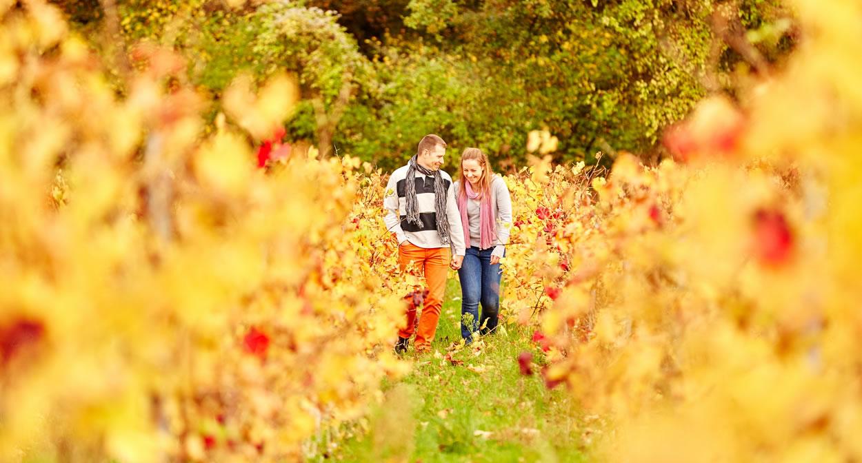 Balade dans les vignes, Domaine des Génaudières, Le Cellier, Val de Loire © A. Lamoureux