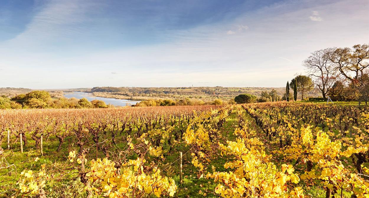 Domaine des Génaudières - Le Cellier et point de vue sur la Loire © A. Lamoureux