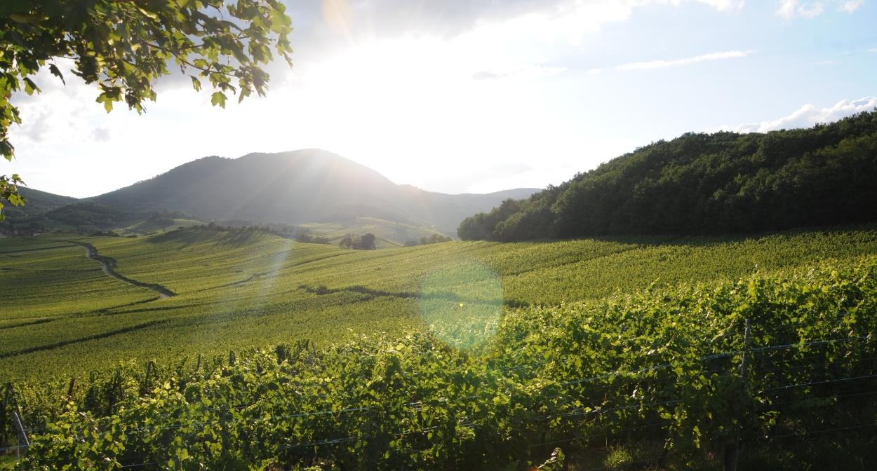 Dîner au cœur du vignoble d'Alsace au Domaine Sohler © Sohler