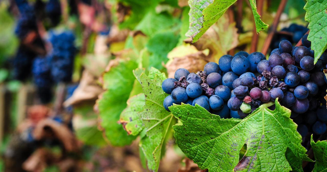 Initiation aux vins de Bourgogne©Leah Walker