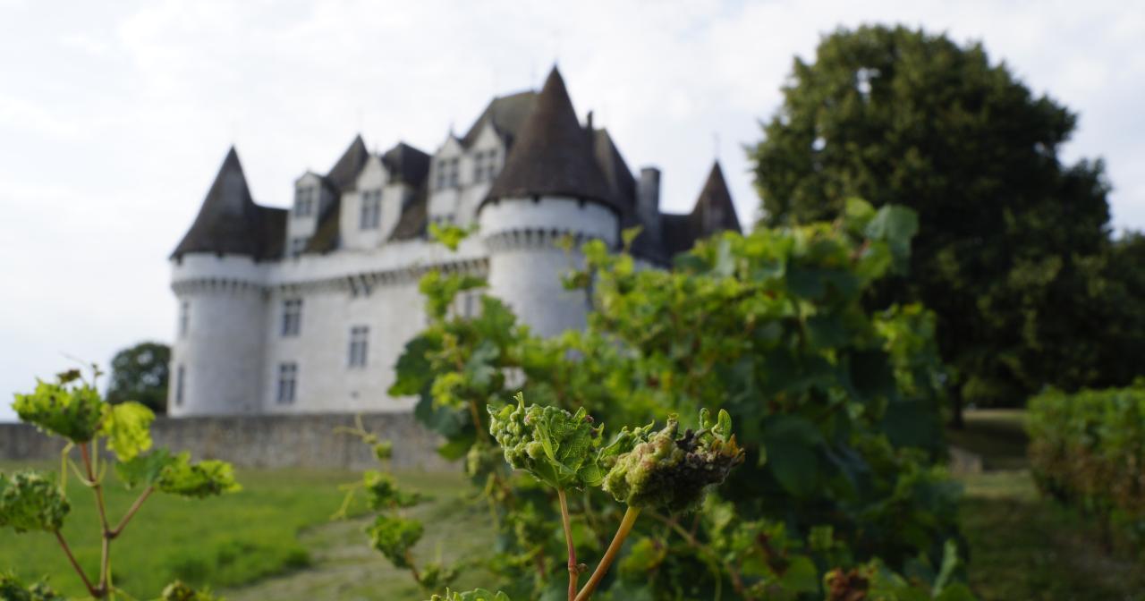 Château de Monbazillac, Bergerac vineyard © MC Grasseau