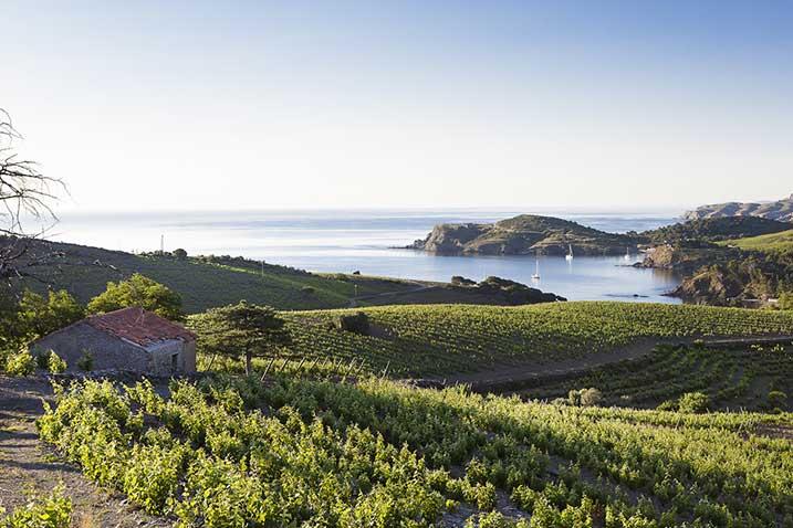 Roussillon vineyards Mediterranean sea Maison Cazes Advini ©Clos de Paulilles