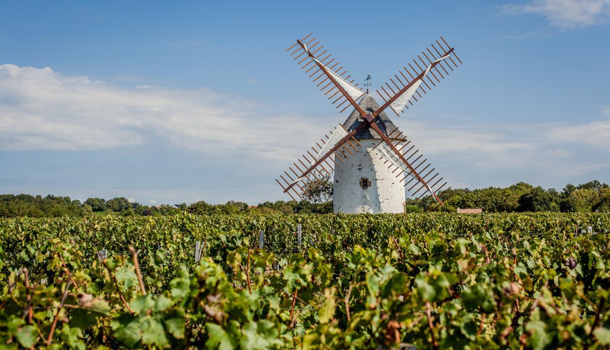 The Vendée vines © Fanny Paris