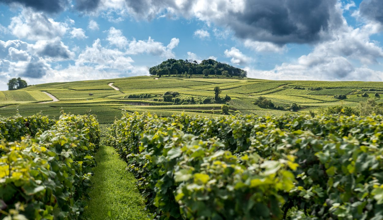 Champagne's vineyard © M. Boudot-Coll. ADT Marne