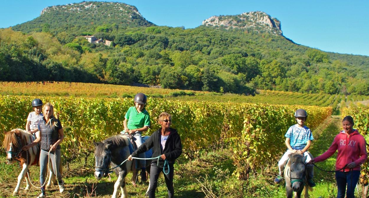 Les Vignes Réboussières balade à dos d'ânes dans les vignes © Les Vignes Réboussières