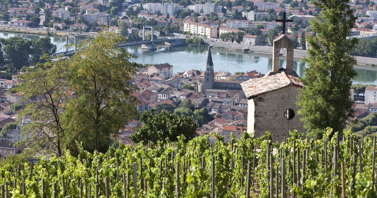 Hermitage, Rhône Valley Vineyard ©Inter Rhône