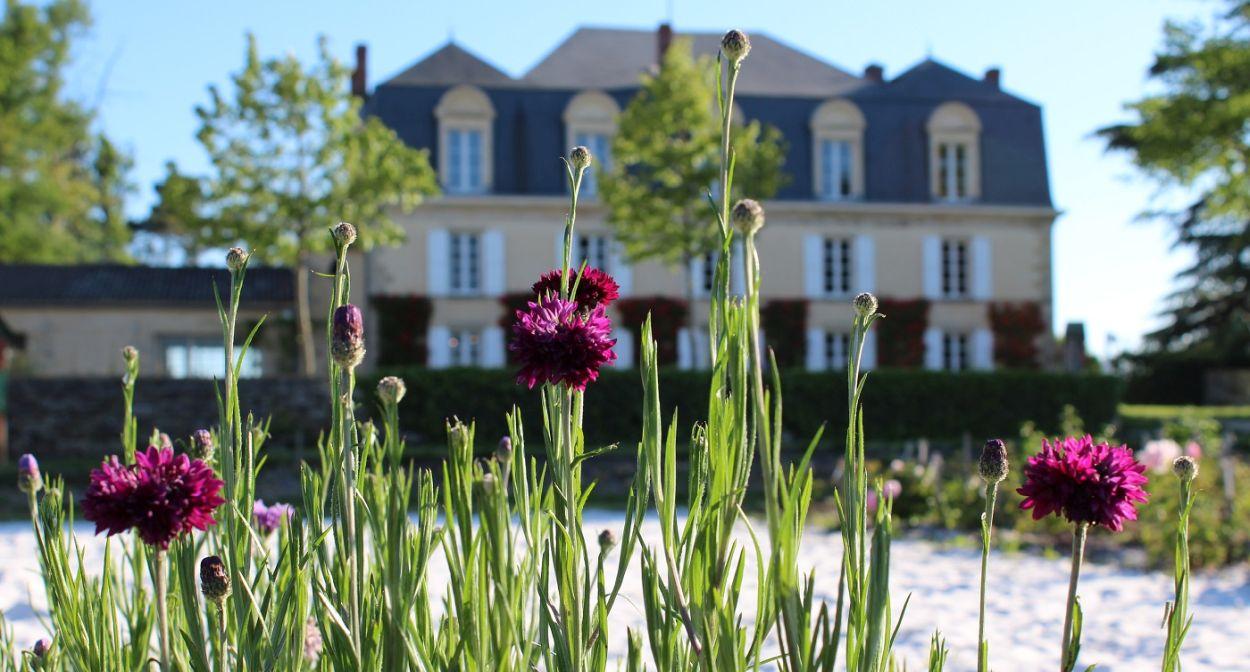 Château Guiraud, vignoble de Bordeaux