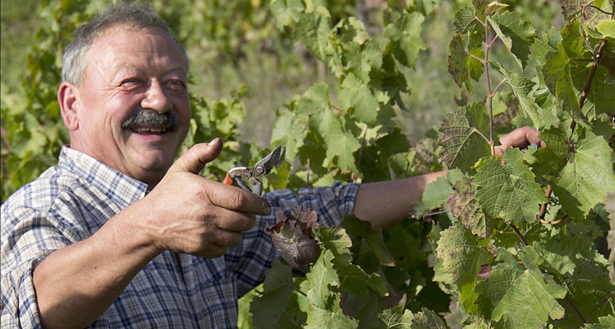 Jean-Luc Matha, Marcillac, vignoble du Sud Ouest
