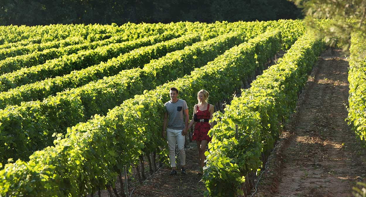 Coquillade Village, balade dans les vignes