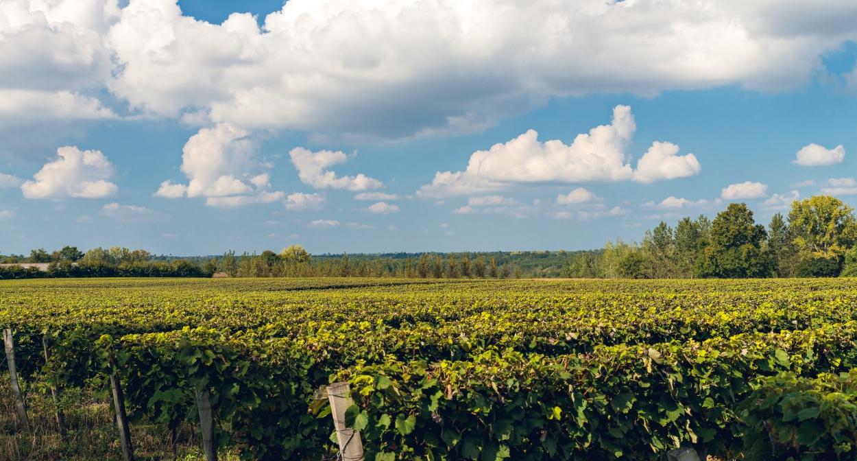 Les vignobles du Domaine d'Ognoas en Nouvelle-Aquitaine © Y. Chevojon