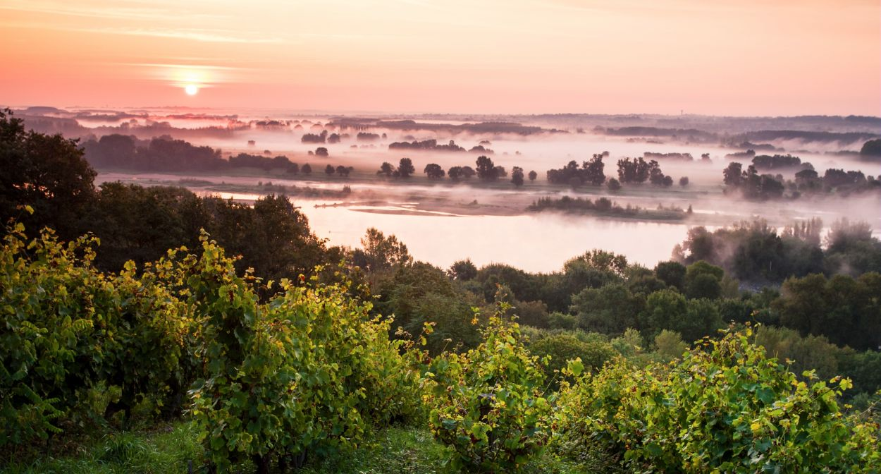 Vignoble de Savennières _Ph-Caharel ©