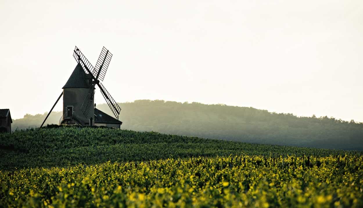 Les vignes de Moulin-à-Vent © Franck Juery