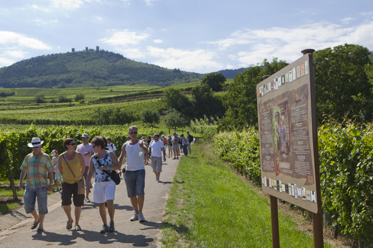 Picnic in the vineyards of Alsacewine tourism ©Meyer Conseil Vins Alsace