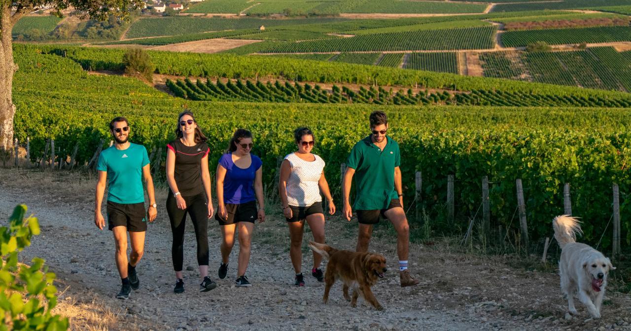 Oenotourisme à Sancerre, vignoble du Val de Loire ©BIVC_PierreMéra