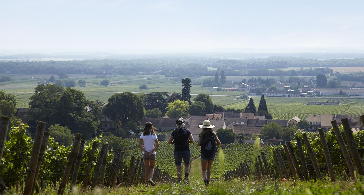 Promenade dans les vignes de Bourgogne