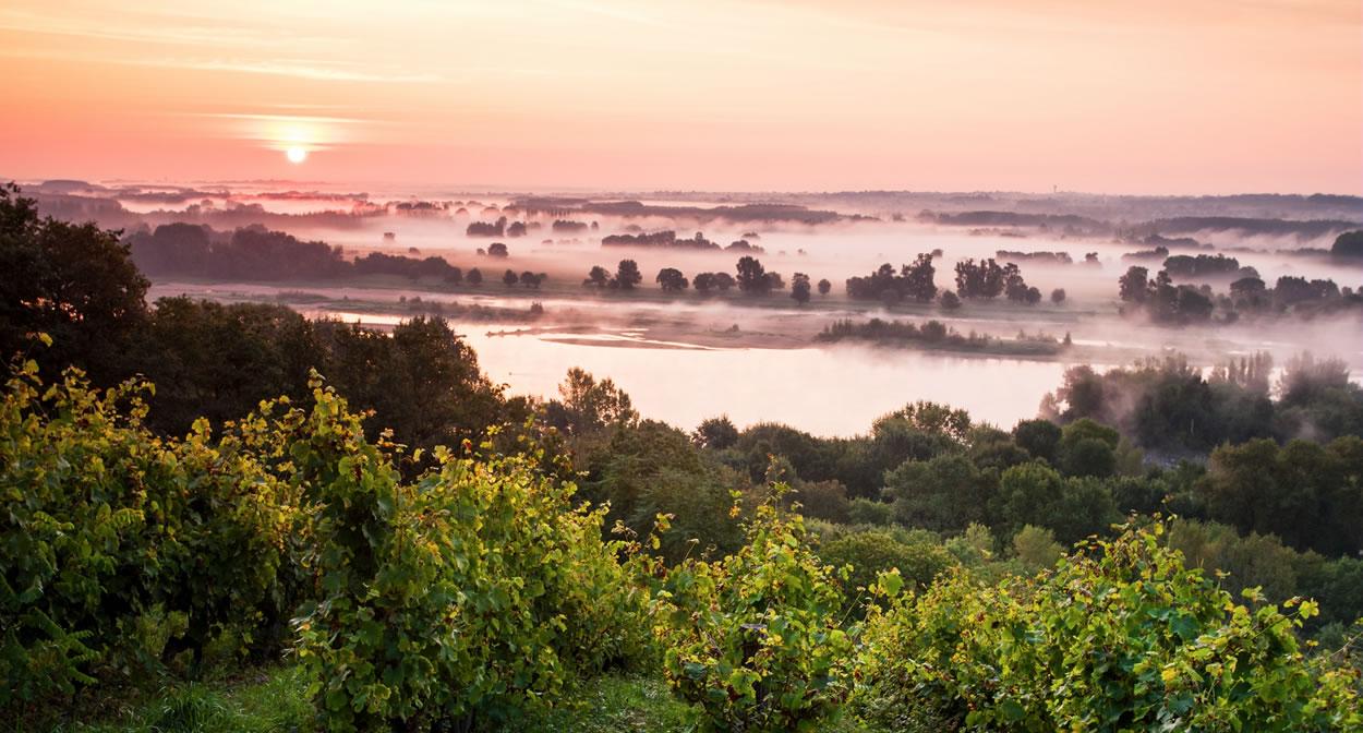 Savennières wine region: La Coulée de Serrant on the banks of the Loire. Morning light © Ph. Caharel