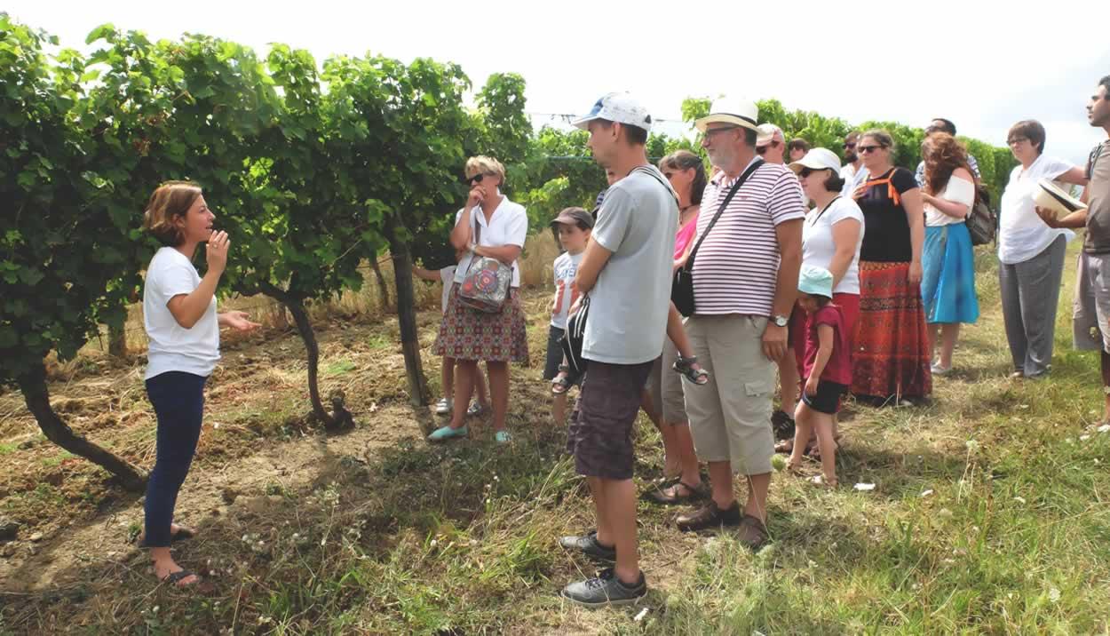 Open house at partner wines estates © La Vinata