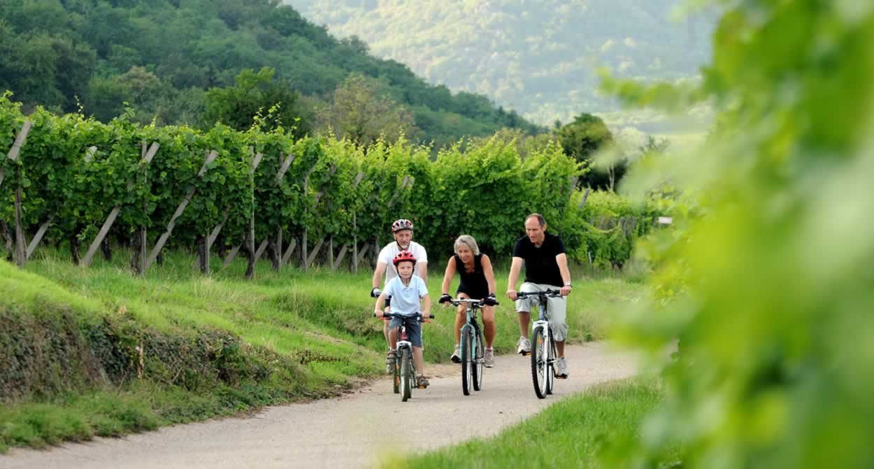 Balade à vélo dans les sentiers viticoles sur la Route des Vins d'Alsace © DUMOULIN-ConseilVinsAlsace