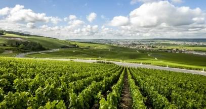 Les coteaux de la Marne, vignoble de Champagne © Coll. ADT Marne