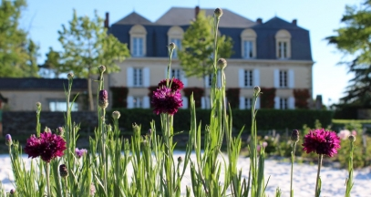 Château Guiraud, Bordeaux vineyard