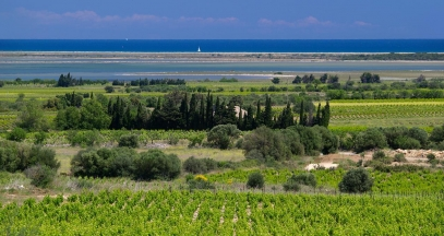 Languedoc, Vineyard, Occitanie