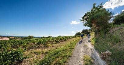 Vacqueyras, Rhône Valley vineyard ©Inter Rhône