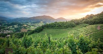 Terraced vineyard in Nouvelle-Aquitaine © Pierre Carton