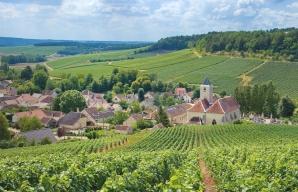 Champagne vineyard ©Didier Guy