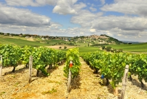 Sancerre vineyards Wine Fair in the Loire Valley ©CRT Centre Val de Loire