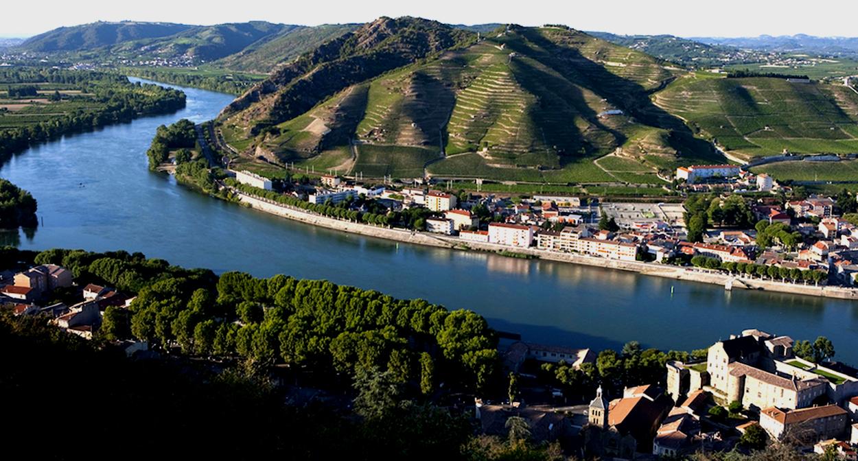Vineyard of the Rhône Valley