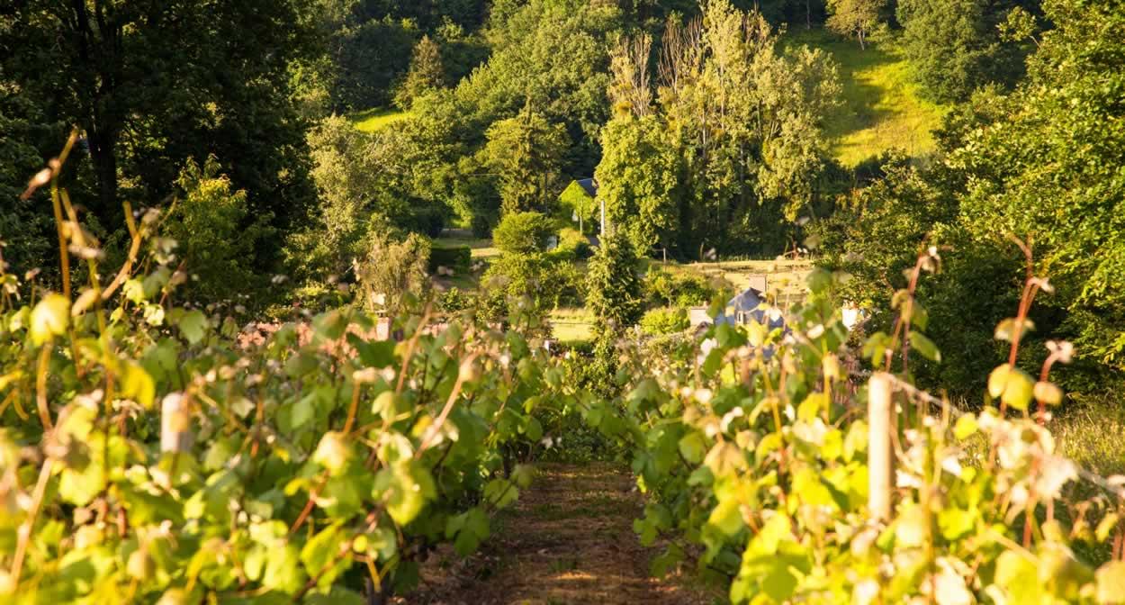 Vignoble des vins de Jasnières et Coteaux du Loir - Vallée du Loir © J.Ph Berlose-Cemjika