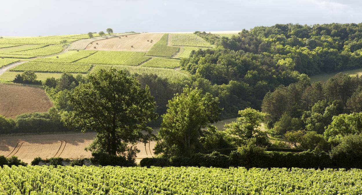 Vineyard, Château de Béru ©ChâteaudeBéru