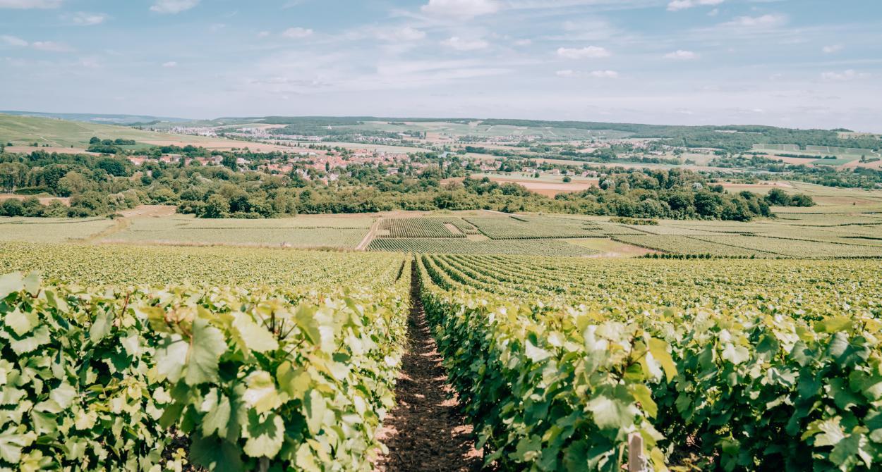 Vineyards_France ©Tourdelust